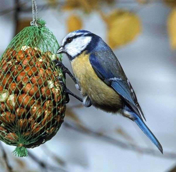 Идеи создания кормушек для птиц из подручных материалов