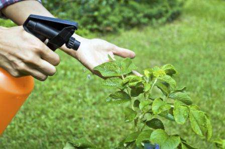 Муравьи в огороде: как избавиться раз и навсегда? Советы дачников