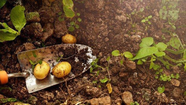 Компост своими руками - как приготовить компост, что можно и нельзя