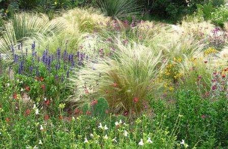Декоративные травы для сада: фото и названия. Где и как садить
