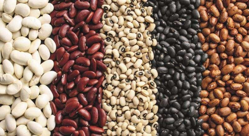 Эффективные способы хранения зерновой фасоли