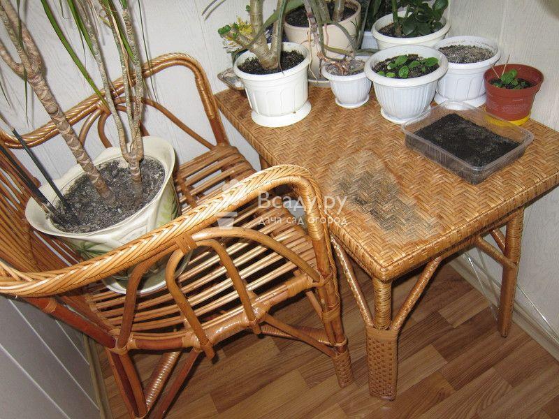 Удаляем плесень и гниль на деревянной и плетеной мебели