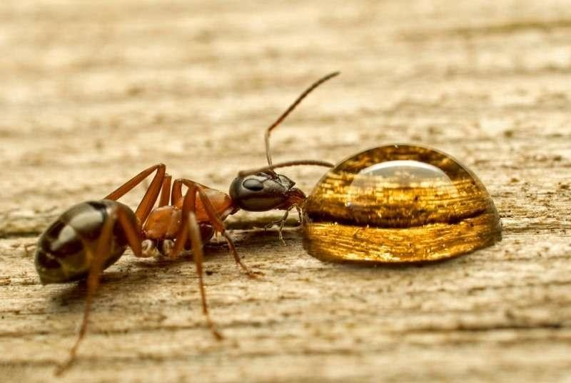 Как избавиться от муравьев в доме народными способами