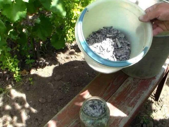 Подкормка винограда весной: чем, когда и как удобрять?