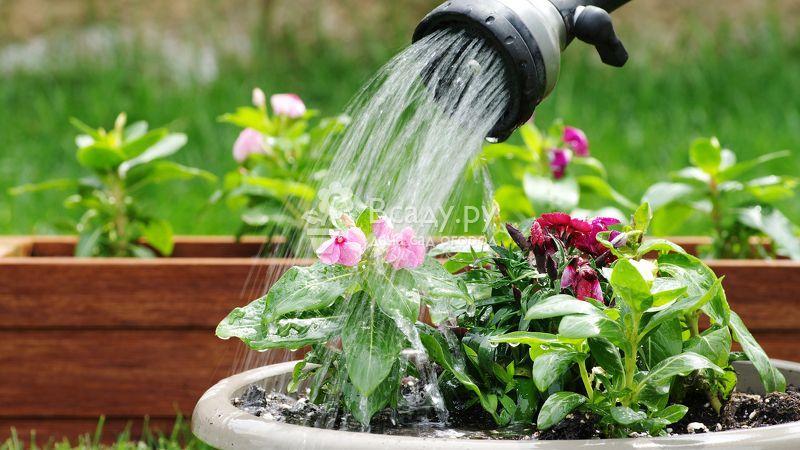 Натуральные подкормки для цветов и декоративных растений