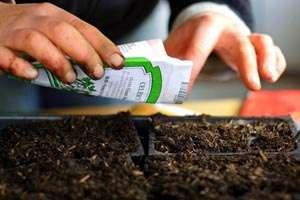 Как вырастить огурцы на подоконнике своими руками?