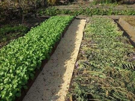 Что посадить под зиму для удобрения земли? Чем и как удобрять.