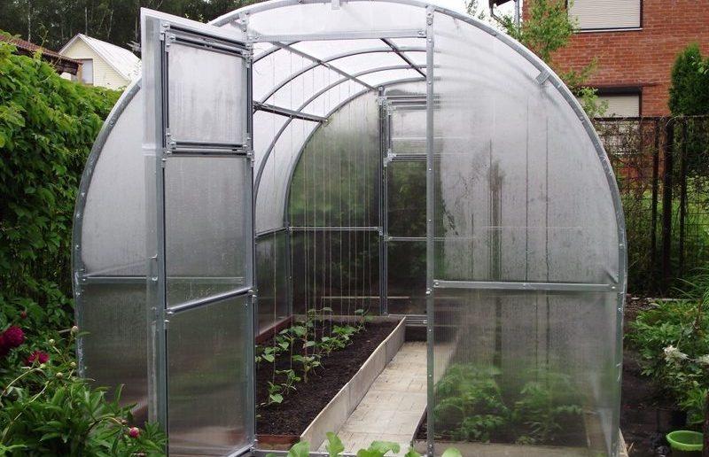 Чёрная плесень и зелень в теплице из поликарбоната: почему растёт и как избавиться