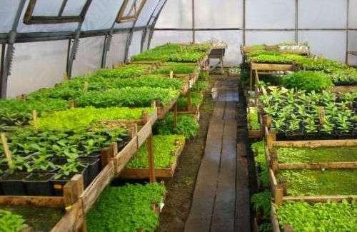 Советы по выращиванию рассады овощных культур в 2019 году