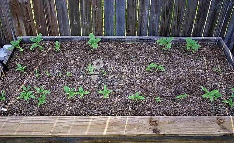 Школка для доращивания растений - подготовка и применение
