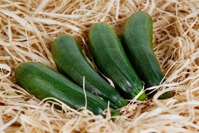 Какие кабачки могут храниться зимой без холодильника и как их подготовить