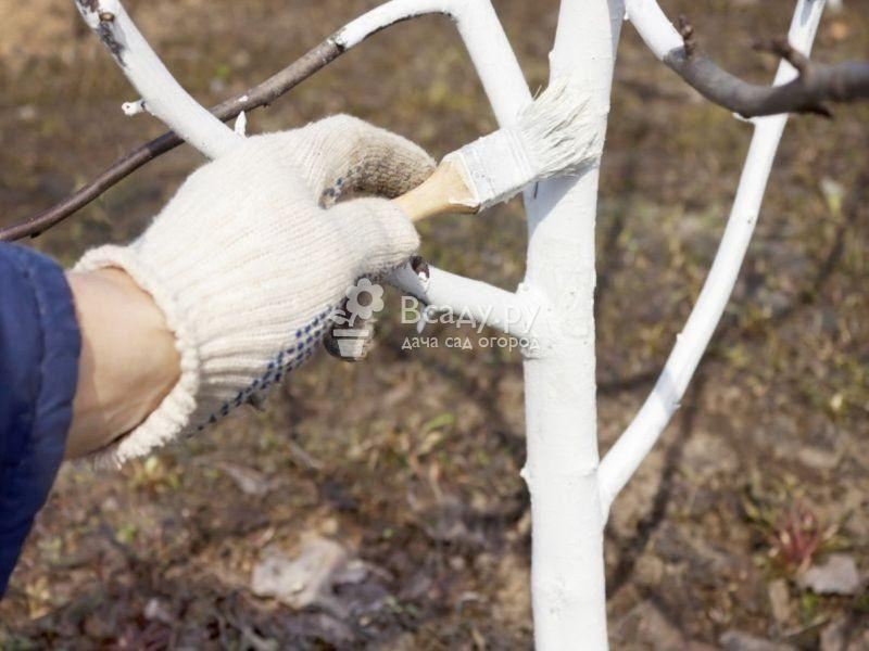 Как защитить деревья от морозобоин