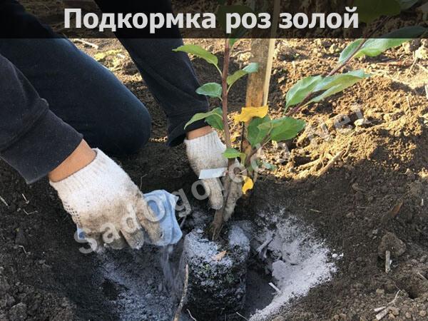 Древесная зола: применение на огороде, свойства