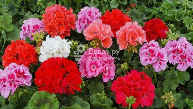 Неприхотливые цветы для сада - выбираем растения не требующие ухода