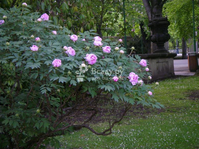 Цветы в саду - создаем цветник из красивых и не привередливых растений