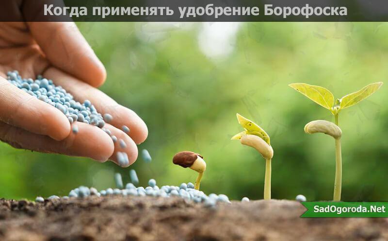 Удобрение борофоска: эффективное применение на огороде, инструкция
