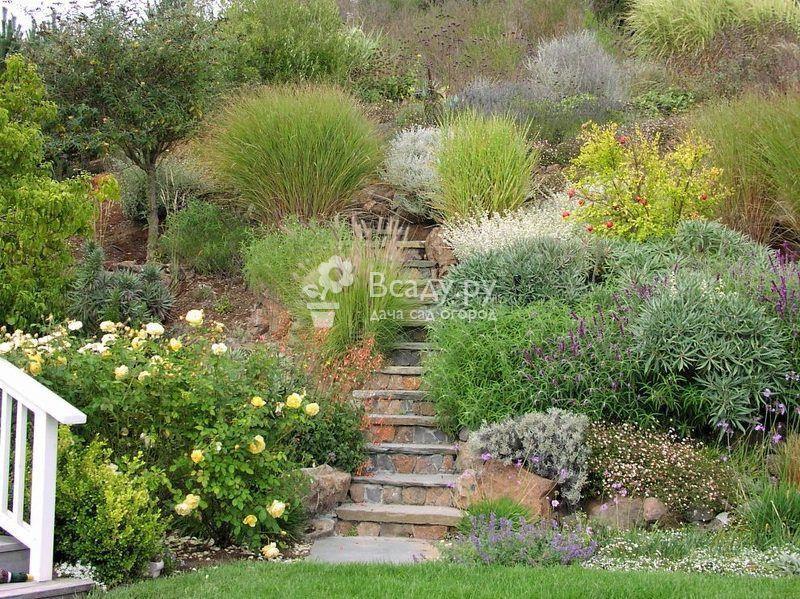 Декоративная трава для сада - выбираем растения и украшаем участок