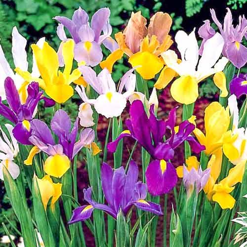 Многолетние цветы для дачи и сада цветущие все лето - каталог с названием и фото