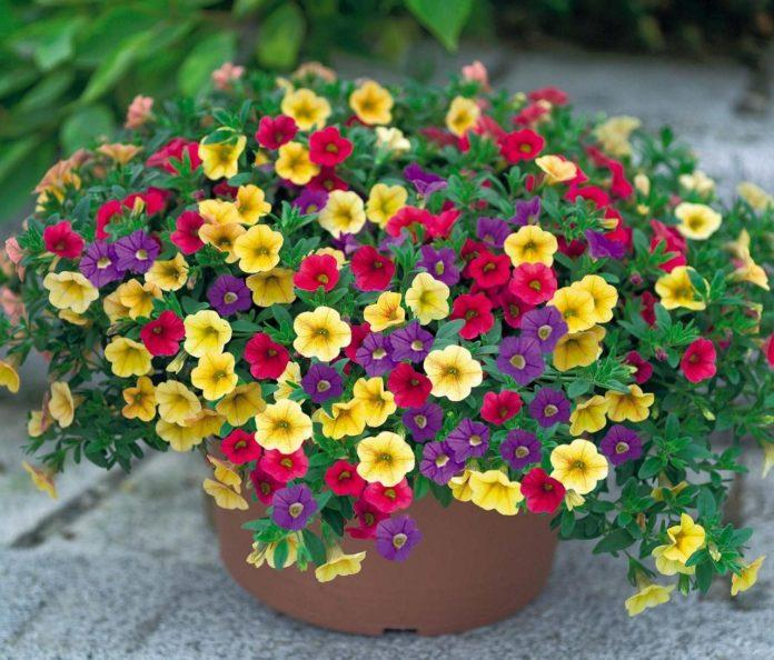 Работы в саду в августе - полезные советы дачникам