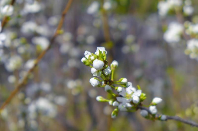 Обработка деревьев и кустарников весной от вредителей и болезней