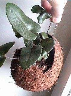 Что нужно для создания комнатных мини-садов + фото, сады дзен