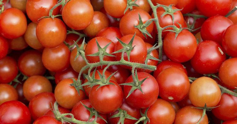 Сорта помидор не требующие пасынкования