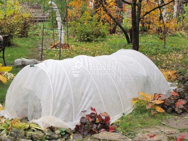 Снимаем зимнее укрытие с декоративных растений правильно