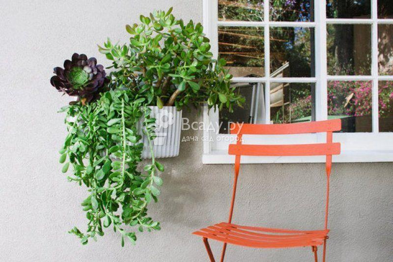 Вертикальные сады своими руками - идеи обустройства для дома и участка