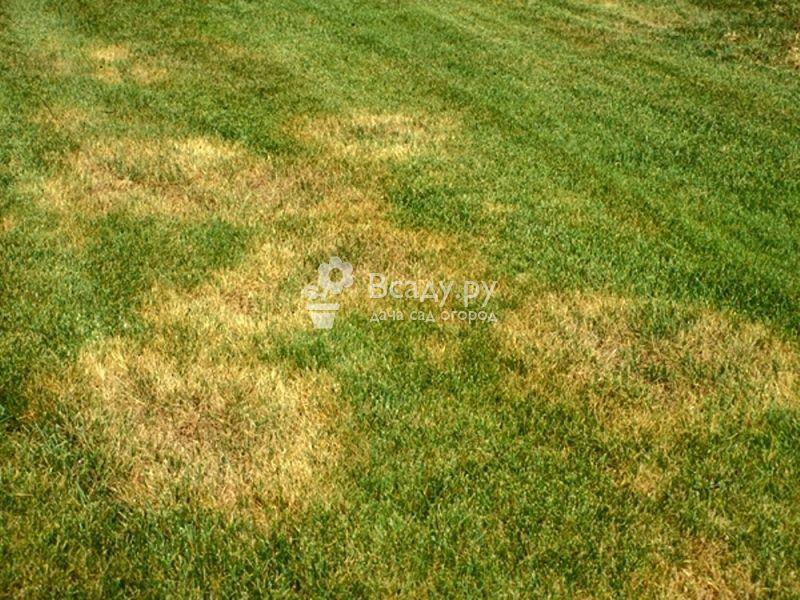 Устраняем летние проблемы газона