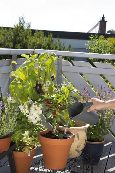 7 вьющихся растений для балконов