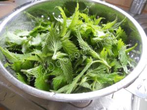 Как приготовить и вносить удобрение из крапивы для растений