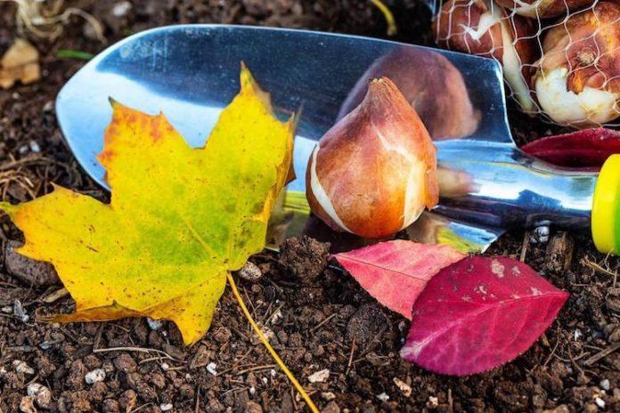 Подготовка сада к зиме осенью: список дел и полезные советы для садовода