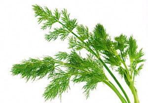 Зелень в огороде, названия и фото