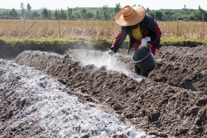 Чем раскислить почву осенью: готовим грунт к следующему сезону