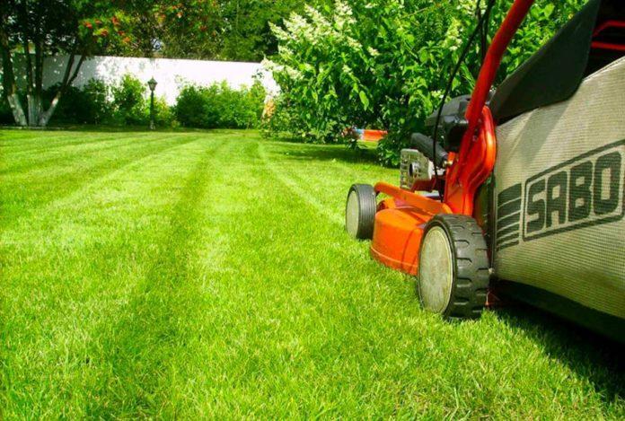 Уход за газоном - ландшафтный дизайнер советует