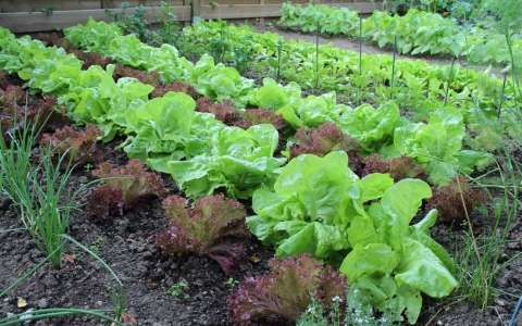 Как правильно сажать овощи под зиму с учетом их особенностей