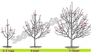Как правильно ухаживать за яблоней чтобы был хороший урожай