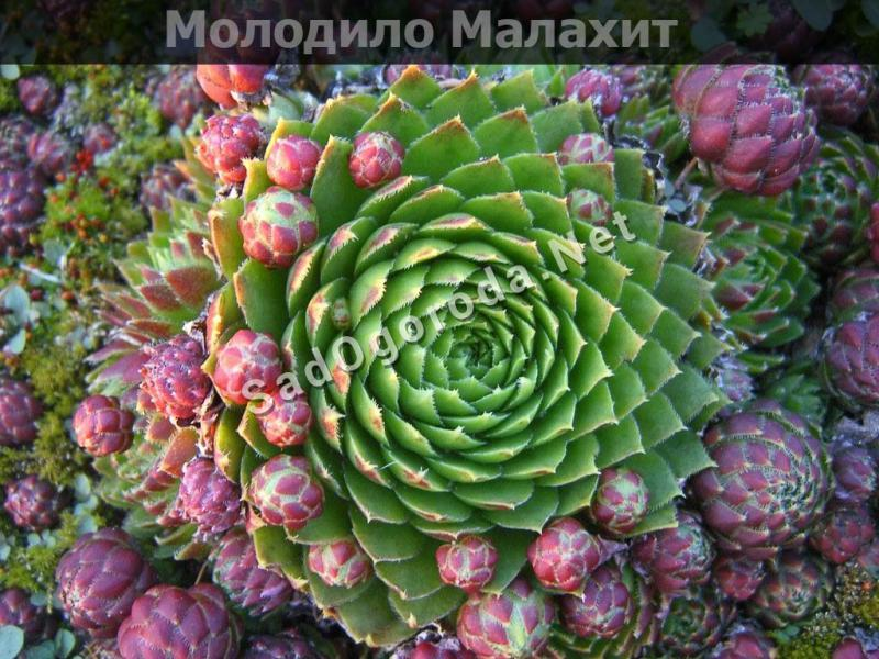 Суккуленты: правильный уход и выращивание в домашних условиях
