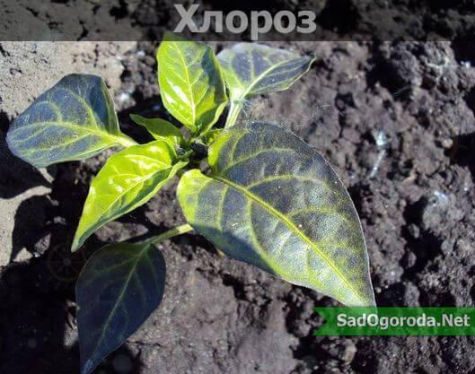 Аммофоска: состав, применение удобрения, нормы внесения