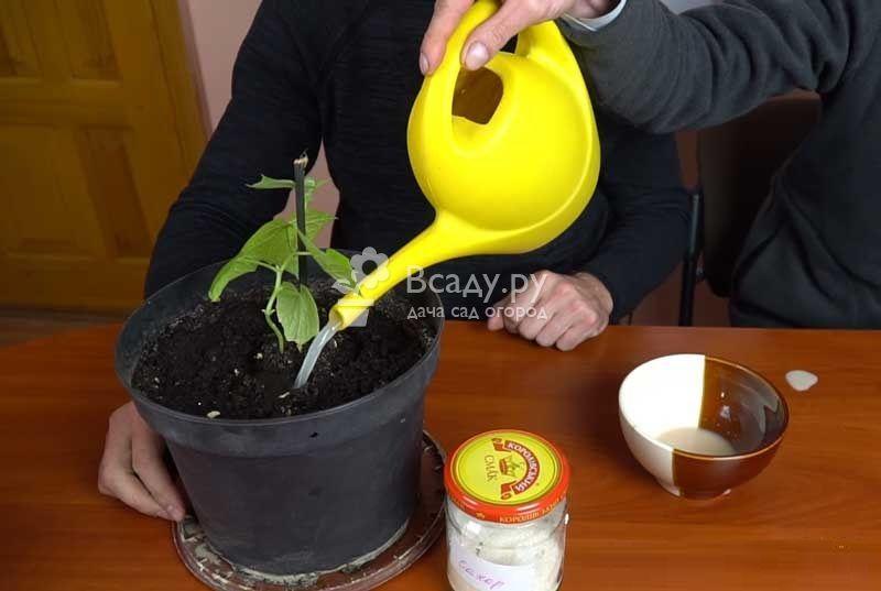 Дрожжевая подкормка для сада и огорода - повышаем урожайность без химии