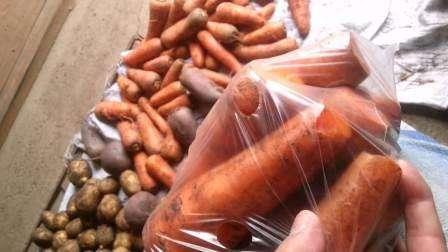 Как хранить морковь и свеклу зимой в домашних условиях?