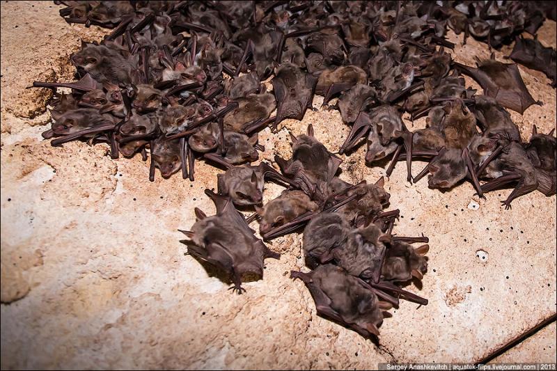 Как избавиться от летучих мышей под крышей, на даче
