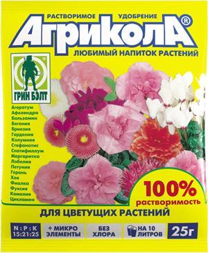 Как выращивают калину бульденеж в Сибири