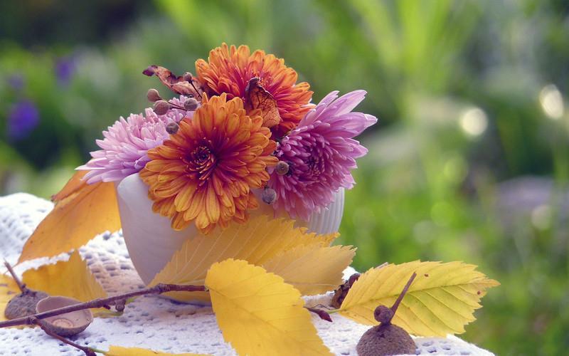 Осенние цветы – как хорошо вы их знаете? (красивейший фототест)