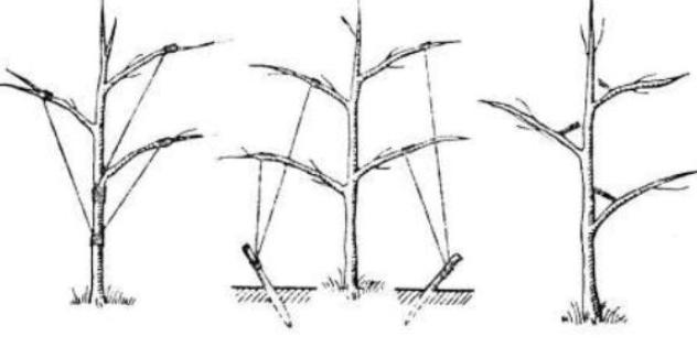 Осенняя обрезка яблони: сроки, схемы, инструкции с фото