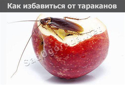 Самые эффективные способы избавления от тараканов