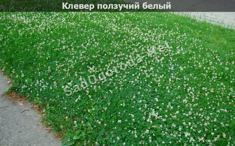 Как сеять газонную траву правильно