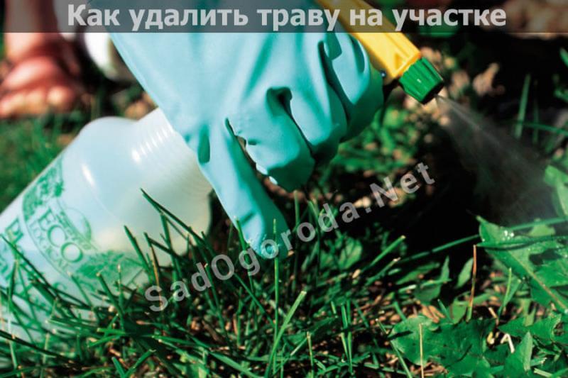 Как избавиться от травы на участке? Описание действенных способов борьбы с сорняками