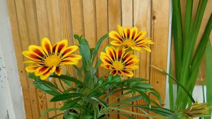 Какие цветы на зиму можно забирать с дачи