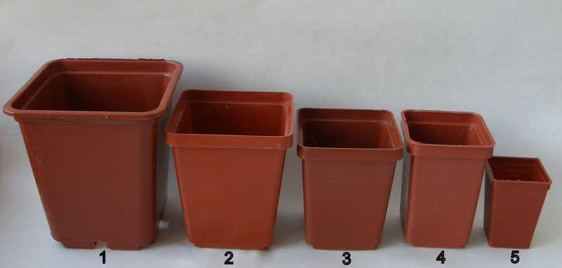 Пересадка кактусов: как правильно переселить колючего питомца